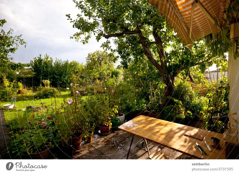 Garden after the rain Branch tree flowers blossom bleed Relaxation holidays Grass Sky allotment Garden allotments Deserted Nature Plant Lawn tranquillity