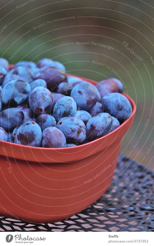 Anticipation | Plums to lose weight fruit fruits Delicious organic Stone fruit Food fruit harvest Garden fruit Summer fruit To enjoy Diet untreated thanksgiving