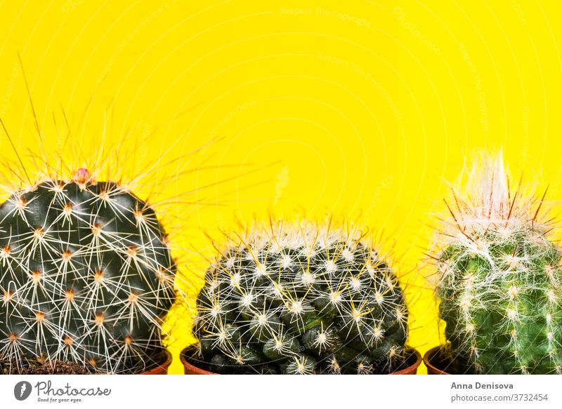Tiny Cactus in the Pot on Bright Neon Background. Saturated Imag cactus neon design minimal fashion background minimalism saturation hue surge pink art green