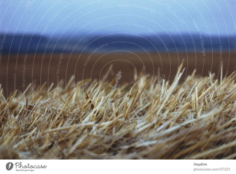Field Depth of field Straw Focal point