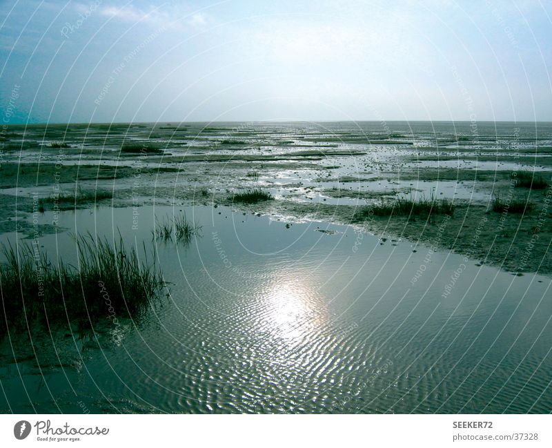 watt Beach Loneliness Calm North Sea Mud flats Sun