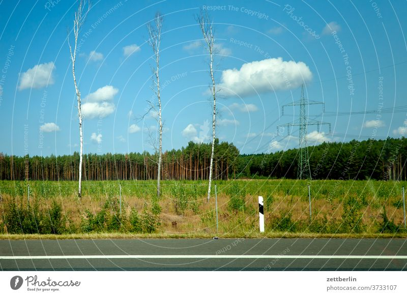 Three birches on the motorway plus electricity pylon Street Highway Transport voyage Tourism individual transport Curb Landscape Forest Field Agriculture