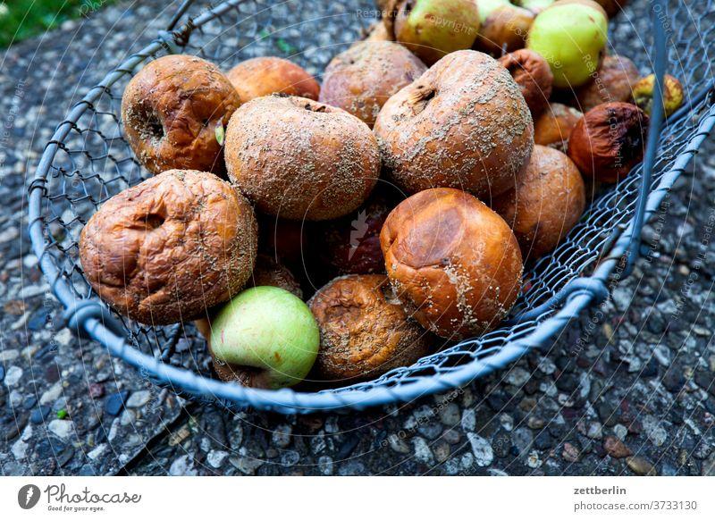 Lazy apples in a basket Garden allotment Garden allotments Deserted Nature Garden plot Summer Copy Space depth of field Basket Harvest vitamins sluggish Spoiled