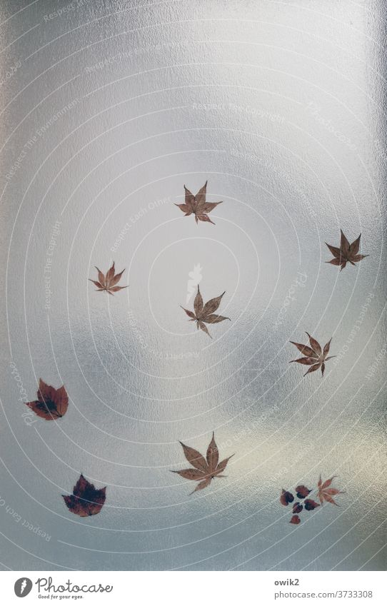 Distance types Window Structures and shapes Detail Deserted Colour photo Window pane Autumn leaves Transience Glass flaked Decoration Copy Space top gap