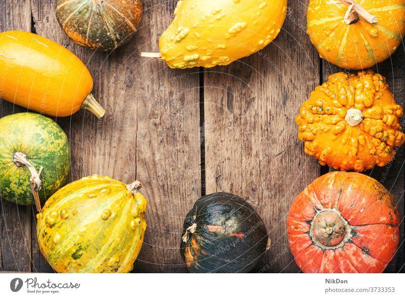 Assortment of autumn pumpkins fall gourd season harvest vegetable seasonal decoration autumnal nature october squash color natural colorful decorative concept