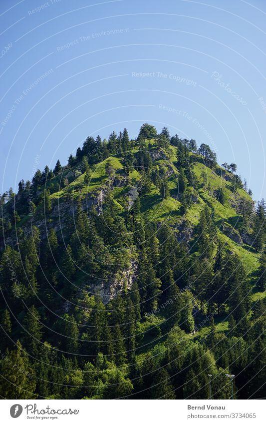 The summit Schwangau allgau green Mountain Alps Bavaria tree hillock Peak Grass Blue Sky Round Rock Gray Alpine Hiking Mountaineering vacation Sunlight Day