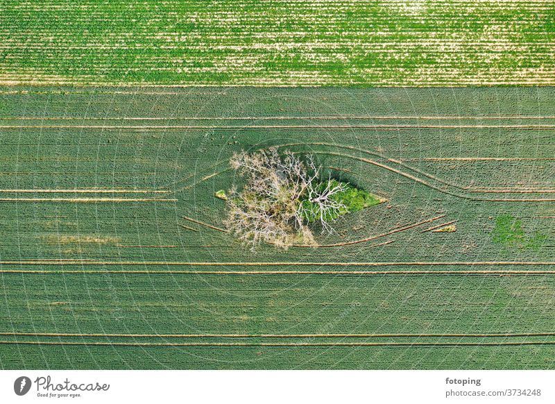 dead tree from above Image aerial photograph drone Drone pictures Aerial photograph Bird's-eye view from on high plants Plant Branch Twig trunk Tree trunk
