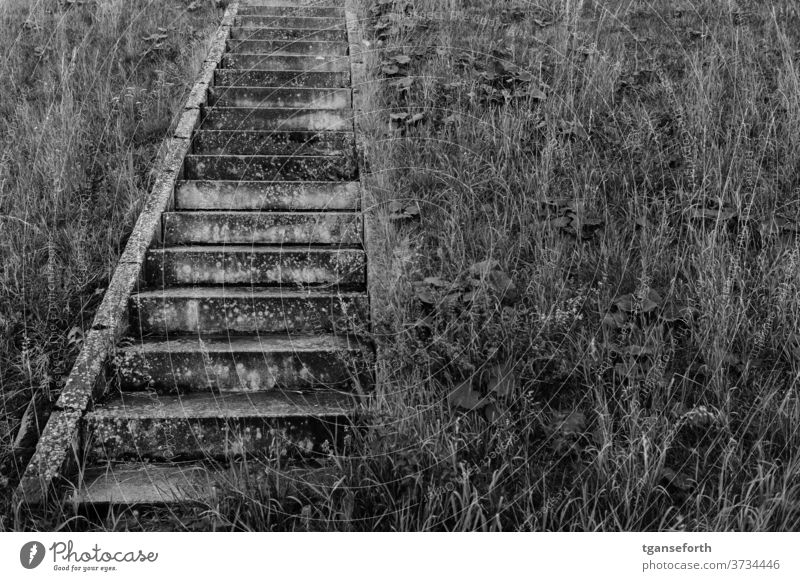 Stairs in the dike Dike Grass Concrete Architecture upstairs Lanes & trails Deserted Exterior shot Day Black & white photo Sharp-edged Upward Abstract Esthetic