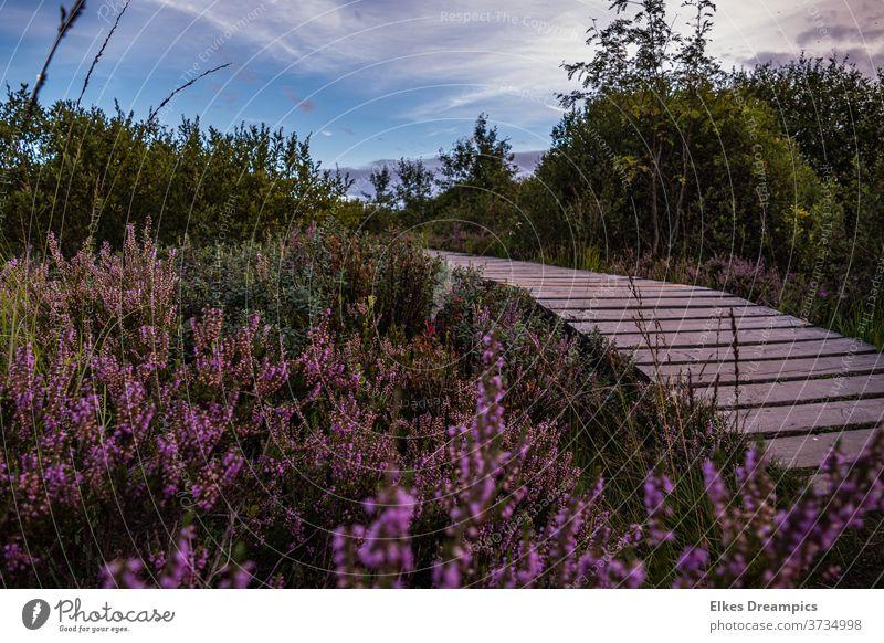 On footbridges into the Hautes Fagnes Venn Heathland Bog Footbridge Nature Landscape