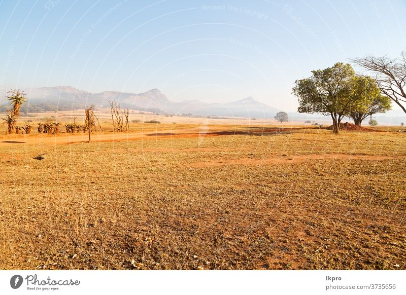 in swaziland   wildlife  nature  reserve africa grass sky field mountain savanna landscape park tree black dirty acacia serengeti cloud view south national