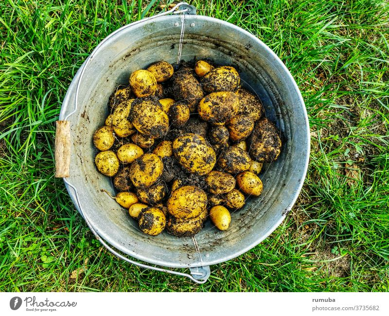 Potatoes, freshly harvested, in buckets, unwashed, full of soil Deserted Exterior shot Colour photo Fresh Vegetable market Greengrocer Farmer's market Basket