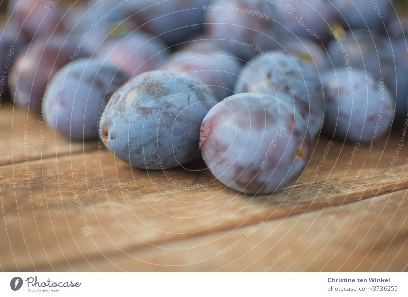 plums / damsons just harvested are lying on an older wooden table Plums House plums Harvest Fresh own harvest Garden Wood backing fruit Mature Nature Delicious