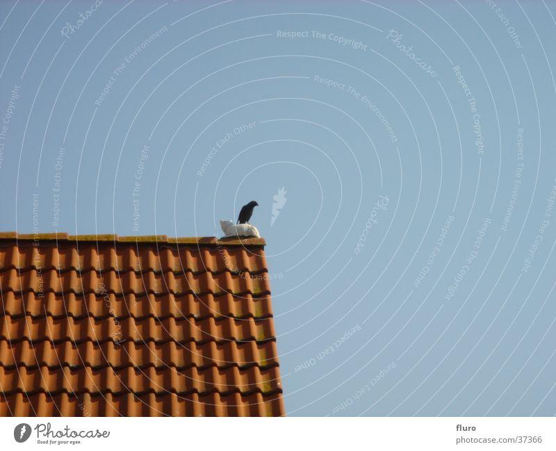 bird on cat on roof Blackbird Gable Transport stone cat Day