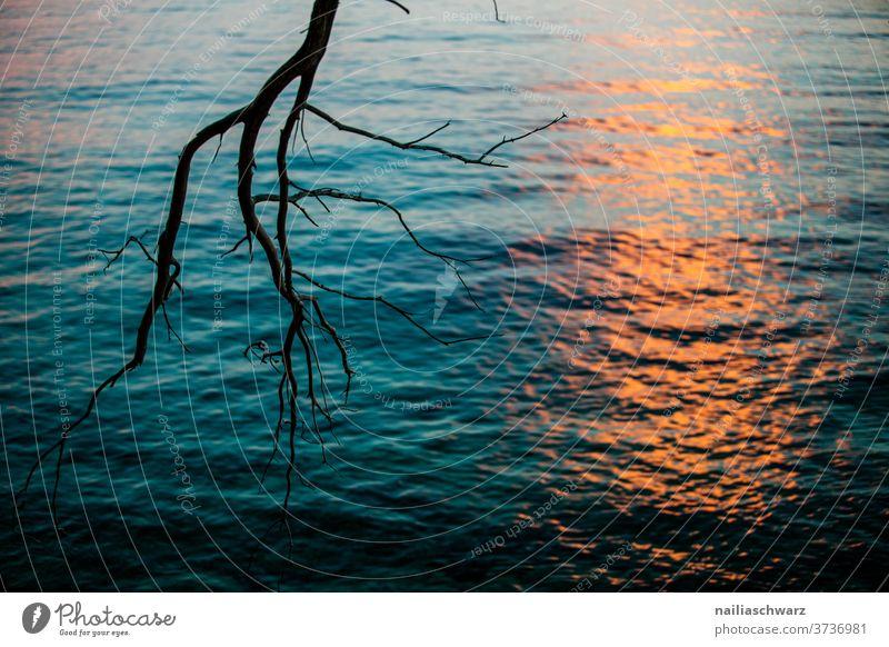 Sunset in Croatia Branch tree Ocean Water seascape Sunlight Dusk Evening sun evening mood Landscape Lanes & trails Brilliant romantic Idyll melancholy Fresh