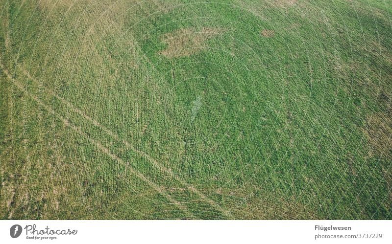 tracks aerial photograph drones UAV view Field Harvest Meadow Lawn Lanes & trails cross green Bird's-eye view curvaceous