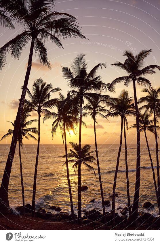 Beautiful tropical sunset with coconut palm trees silhouettes. beautiful nature sea summer ocean beach getaway travel horizon sky purple orange exotic water