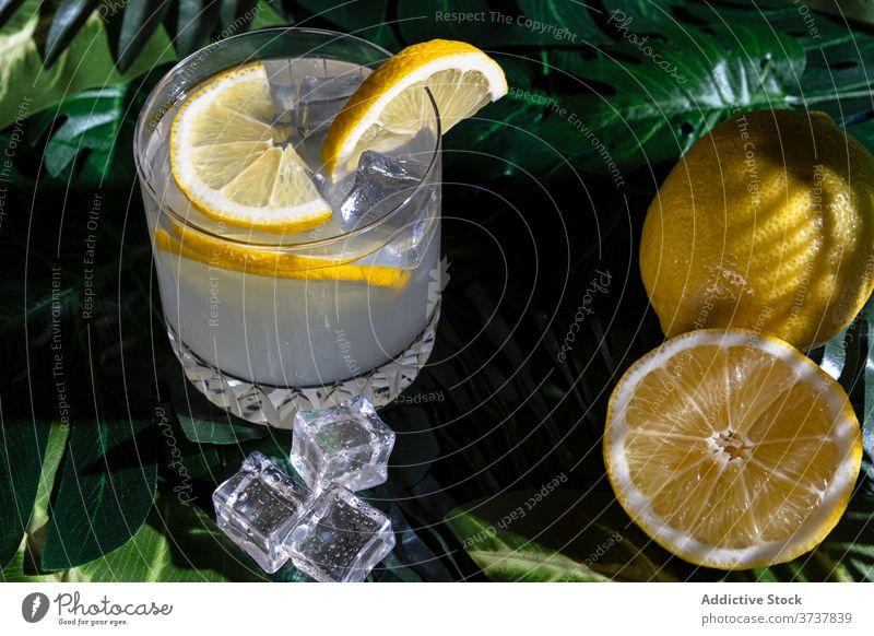 Glass of alcohol cocktail on table drink lemon cold refreshment ice cube glass cool liquid citrus slice bar beverage pub fruit juice tasty delicious liquor