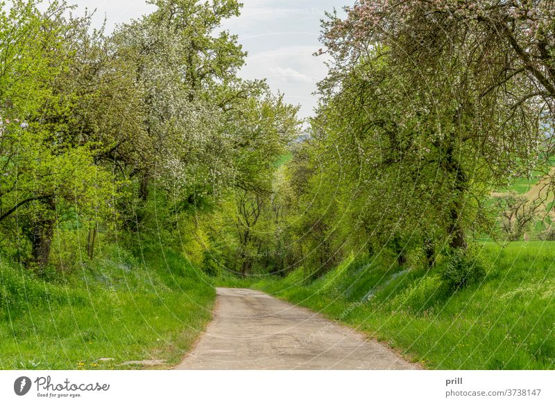 idyllic rural road feldweg straße ländlich frühlingszeit idyllisch baum obstbaum außen landschaft friedlich hohenlohe deutschland süddeutschland wiese weide