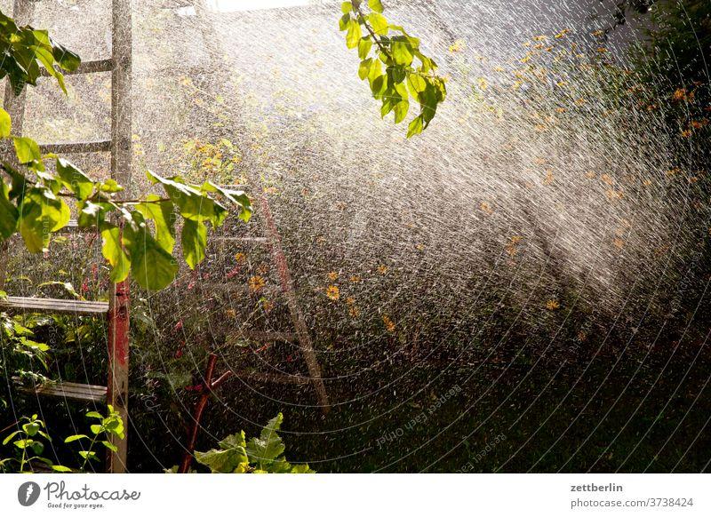 sprinklers Rain Lawn sprinkler Cast Precipitation irrigation Drops of water Irrigation tree Relaxation holidays Garden allotment stepladder Garden allotments
