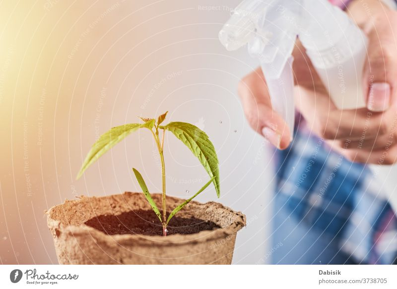 Woman spray water on plant in pot care green flower life gardening nature leaf background soil hand cultivated beginning house seedling home indoor growth