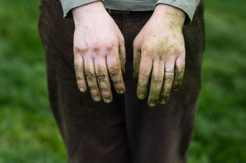 the grass stained hands of a gardener Gardener Green Grass stain landscaper wedding ring Married knuckles lawn Dirty finger nails male hands grower greenskeeper