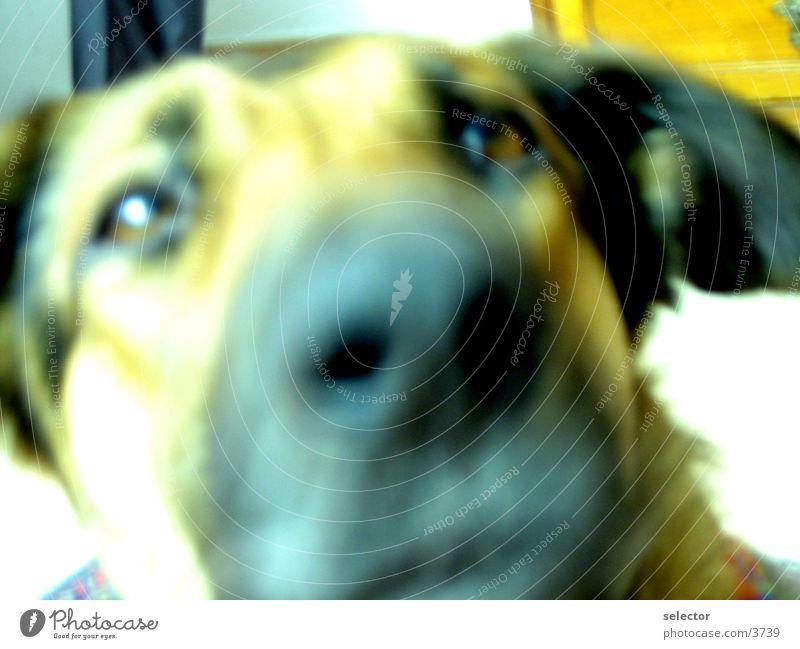 dog Animal Dog Close-up