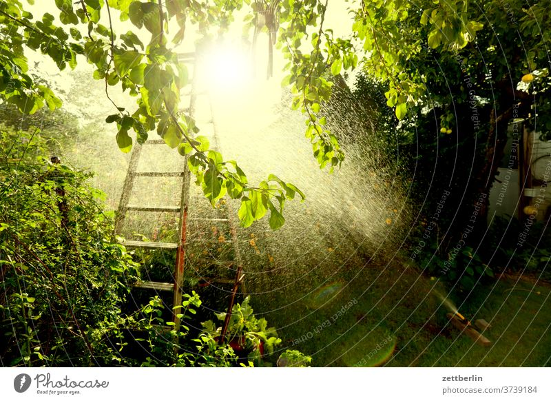 Lawn sprinklers against the light Rain Cast Precipitation irrigation Drops of water Irrigation tree Relaxation holidays Garden allotment stepladder