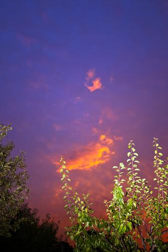 Colourful cloud with flashed plum tree Evening Branch arrogance Relaxation holidays Garden Sky allotment Garden allotments Climate Climate change Deserted Night