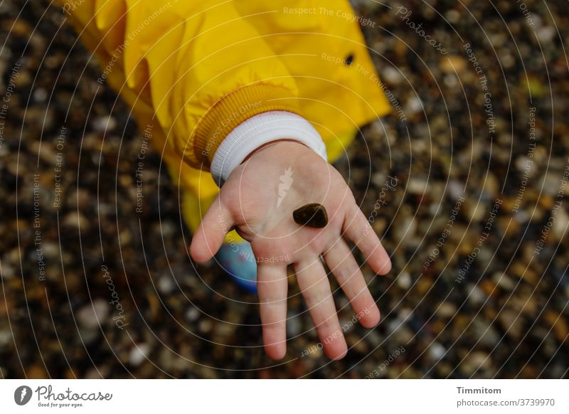 2000. The little big joys Stone Children`s hand Toddler Palm of the hand Indicate Jacket Pebble beach Joy by hand Fingers Playing 1 Shallow depth of field