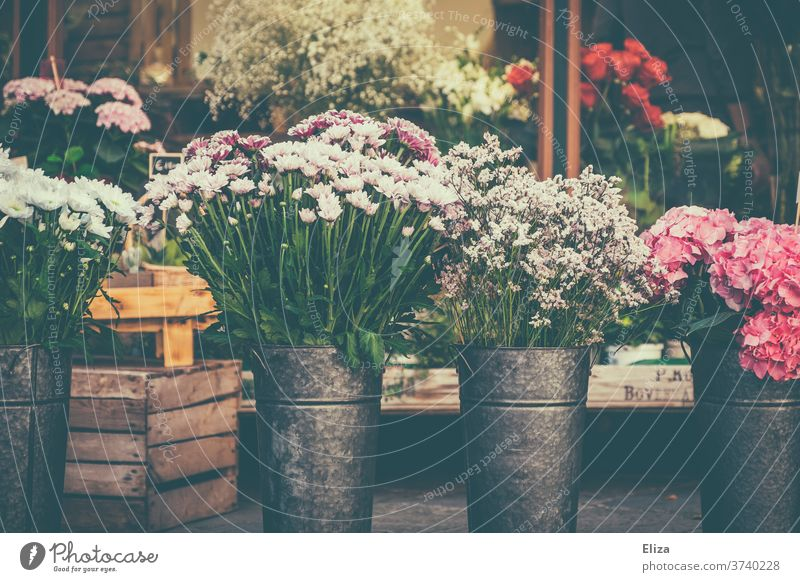 Various colourful flowers at a flower stand Flower stall flower shop variegated spring Vase floral shank Floristry bleed