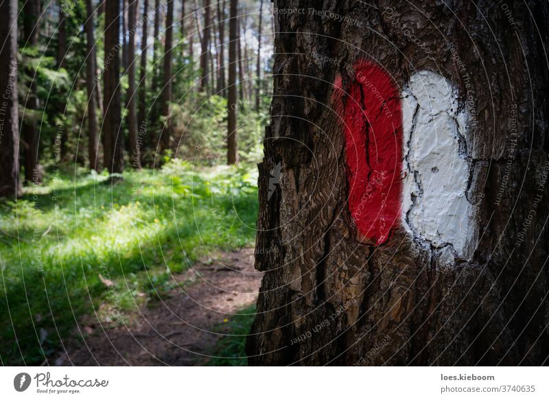 Hiking path in the Austrian Alps with a path sign painted on a tree trunk, Mieminger Plateau, Tirol, Austria nature forest hiking austria track green wood trail