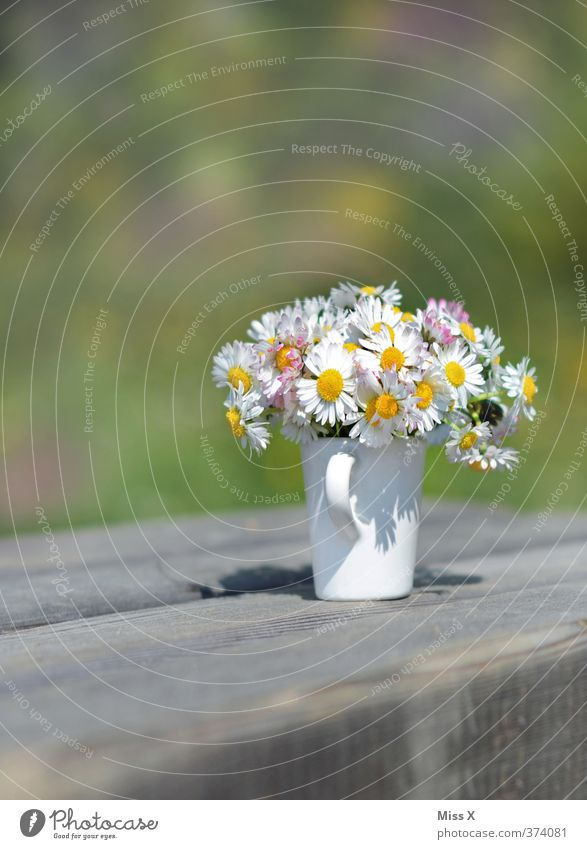 summer greeting Valentine's Day Mother's Day Spring Summer Flower Blossom Blossoming Fragrance Daisy Flower vase Bouquet Vase Pick Colour photo Multicoloured