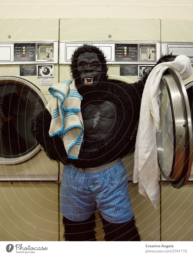 Responsible gorilla doing the laundry Bizarre Costume Gorilla Funny Humor indoors Laundromat Laundry Life Lifestyle Looking Machinery Mask Man Underwear Boxer