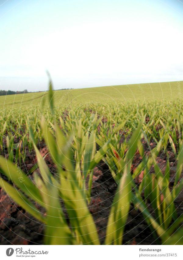 grass whispering Grass Sky