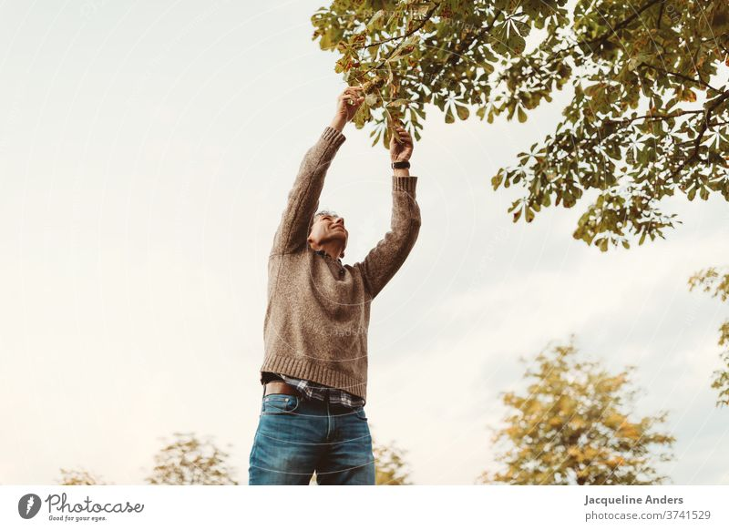 a man picks chestnuts in autumn Chestnut September fruit Chestnut tree Exterior shot Autumn Man Pick amass October Sky from below from bottom to top twigs