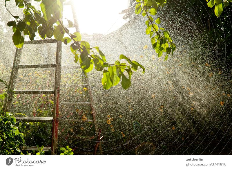 Sprinklers again Branch tree flowers blossom bleed Relaxation holidays Garden Grass Sky allotment Garden allotments Deserted Nature Plant Lawn tranquillity