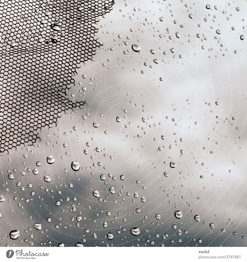 dribble Window Window pane Gauze Fly screen Glass Plastic raindrops Rain Drops of water Water a lot Small Near Diminutive Judder Old worn-out shredded defective