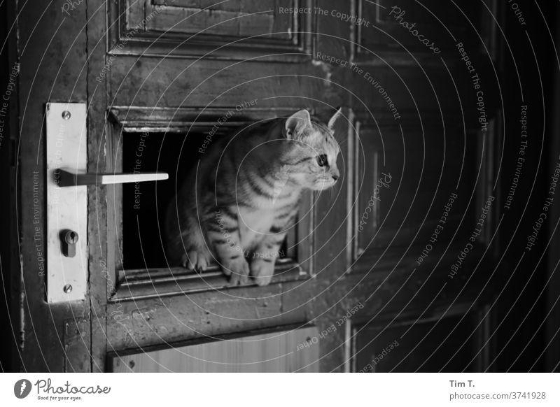 Burglar Cat door Flat (apartment) Monochrome Interior shot Deserted Animal portrait Pet 1 Cute Love of animals Curiosity Animal face Living or residing