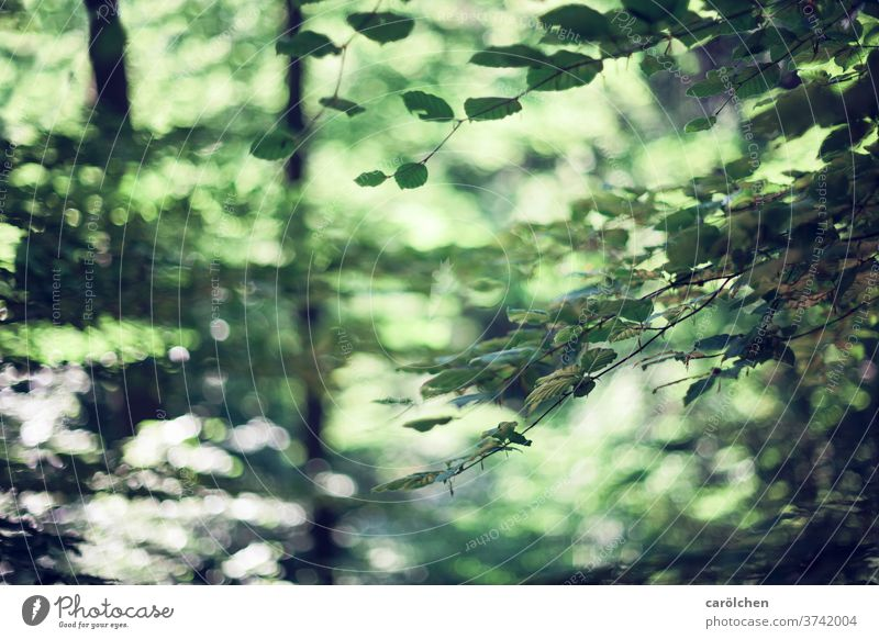 forest atmosphere Forest Twigs and branches green Nature blurred Forest flair bokeh