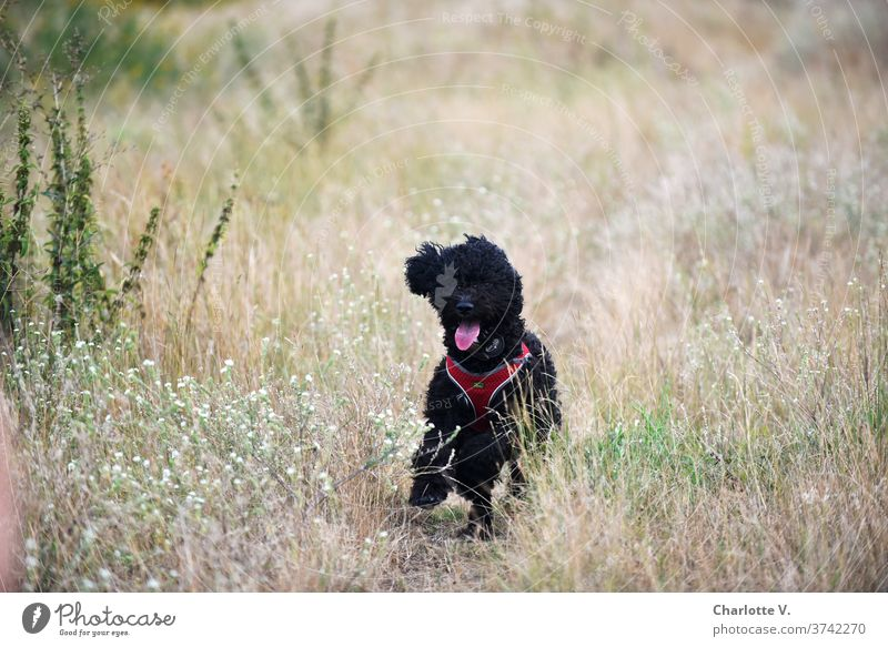 The Wild Hilde Dog Walking Animal Pet Mammal Exterior shot Colour photo To go for a walk Nature Animal portrait Meadow Grass Day Summer Cute Tongue show tongue