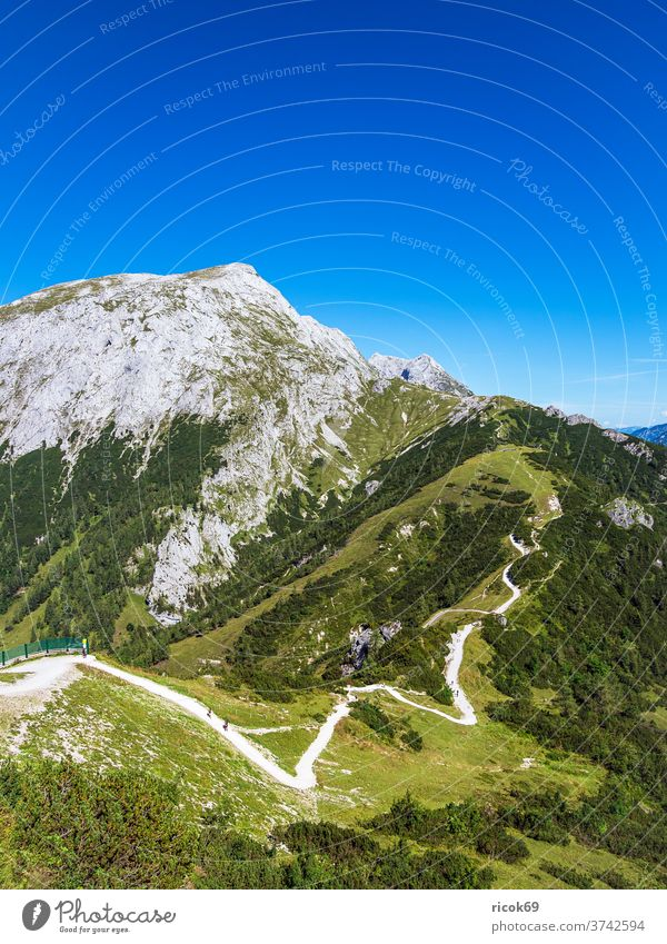 View from the mountain Jenner to the landscape of the Berchtesgadener Land Alps Berchtesgaden Country Bavaria tree Forest off hiking trail Landscape Nature
