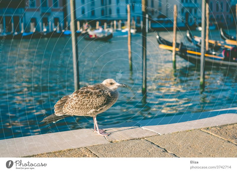 A seagull on the quay of the Canal Grandes in Venice Seagull wharf birds Channel Blue Water Port City Old town gondola