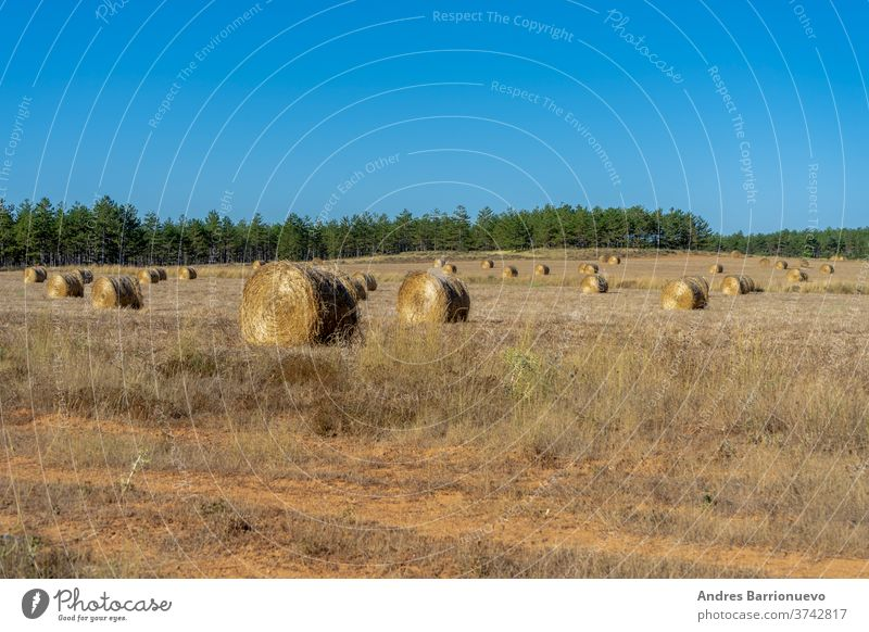 Field with bales of wheat drying in the sun in the mountains cereal nobody meadow barley beauty grain field natural french sky european summer harvesting hay