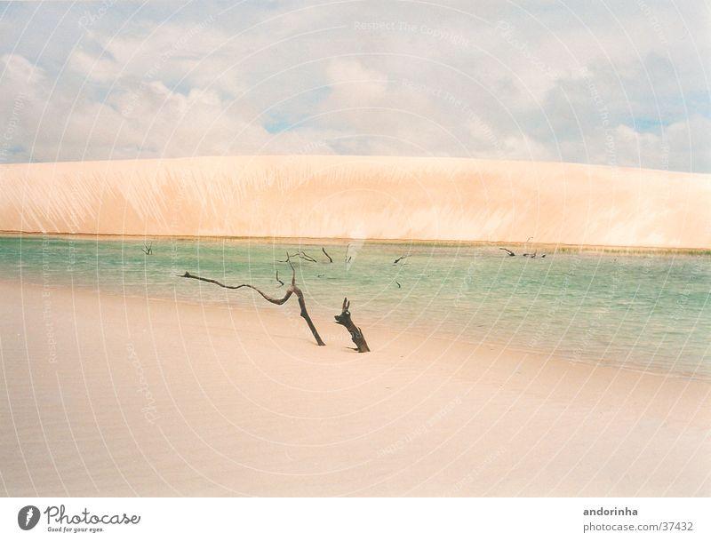 moon dune Sheet Brazil Lagoon Clouds Light Vacation & Travel Beach dune Water Branch Sand Desert Loneliness
