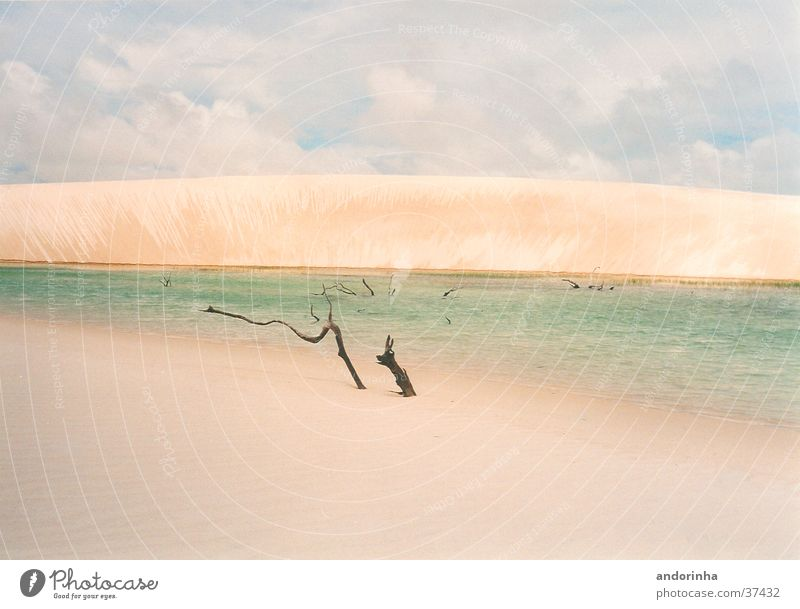 Water Vacation & Travel Clouds Loneliness Sand Branch Desert Beach dune Sheet Brazil Lagoon
