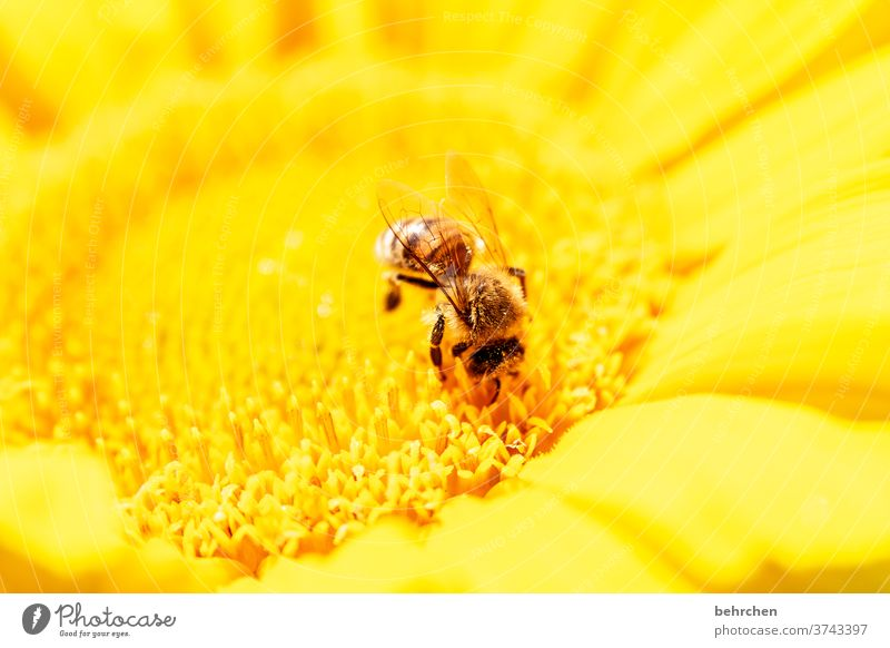 sun(s) day colours Blossoming Diligent Yellow Contrast Animal portrait Wild animal Colour photo Spring fragrant Fragrance Summer Exterior shot Plant Nature