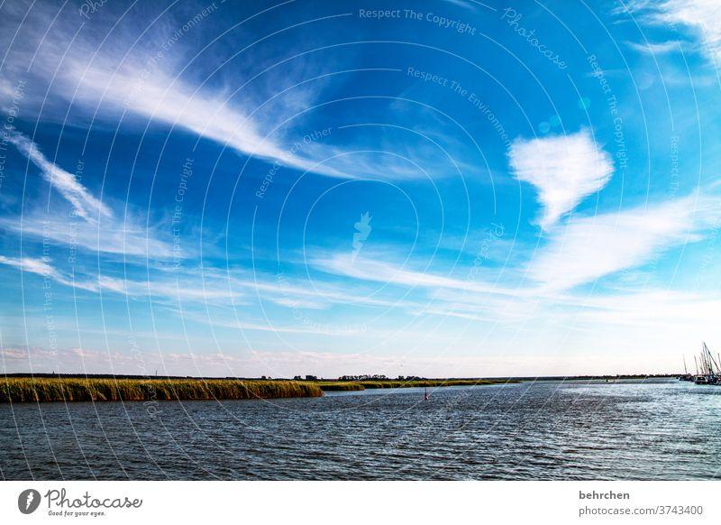 bodden magic wide Longing Wanderlust Dream Blue Sky Baltic Sea Darss Ocean Beach Waves Water Nature Landscape Coast Colour photo Exterior shot Vacation & Travel
