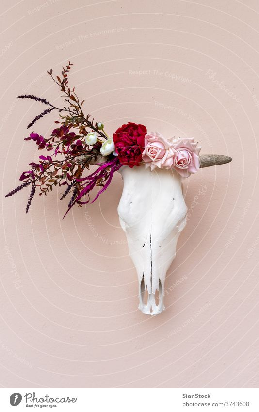 White cow skull decorated with flowers before after before and after head bull art buffalo sculpture bone death animal background horn elegant wild dead