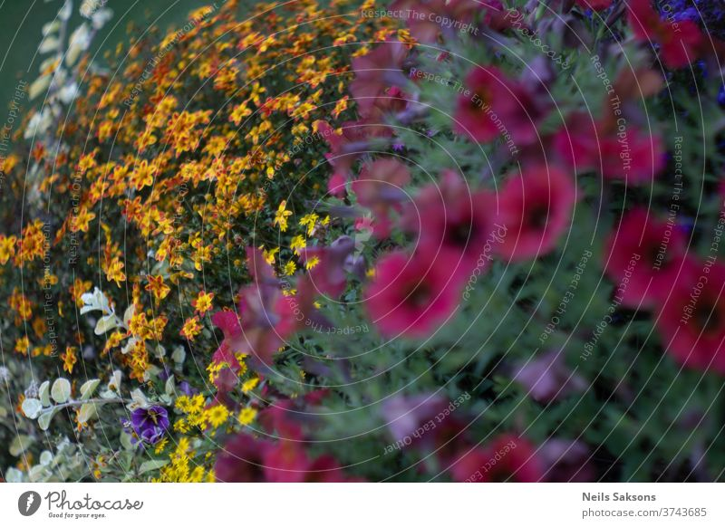 colorful bunch of flowers in garden plants yellow red Nature Flower Blossoming Yellow garden flower bleed White natural green blur Flower meadow Grass Close-up