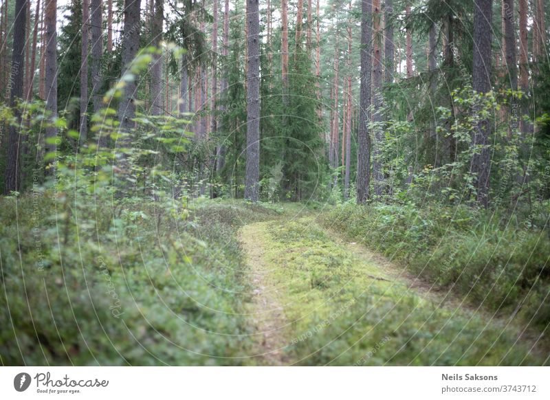 lonely forest pathway in the woods Forest Forestry Forest walk Forest atmosphere Latvia Nature Exterior shot Colour photo Environment Landscape